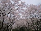 2012春.jpg